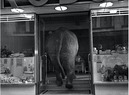 Sam Hood, Elephant's Tea Party (photographie)